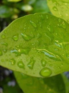 Vegetation01.jpg