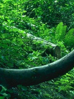 Vegetation02.jpg